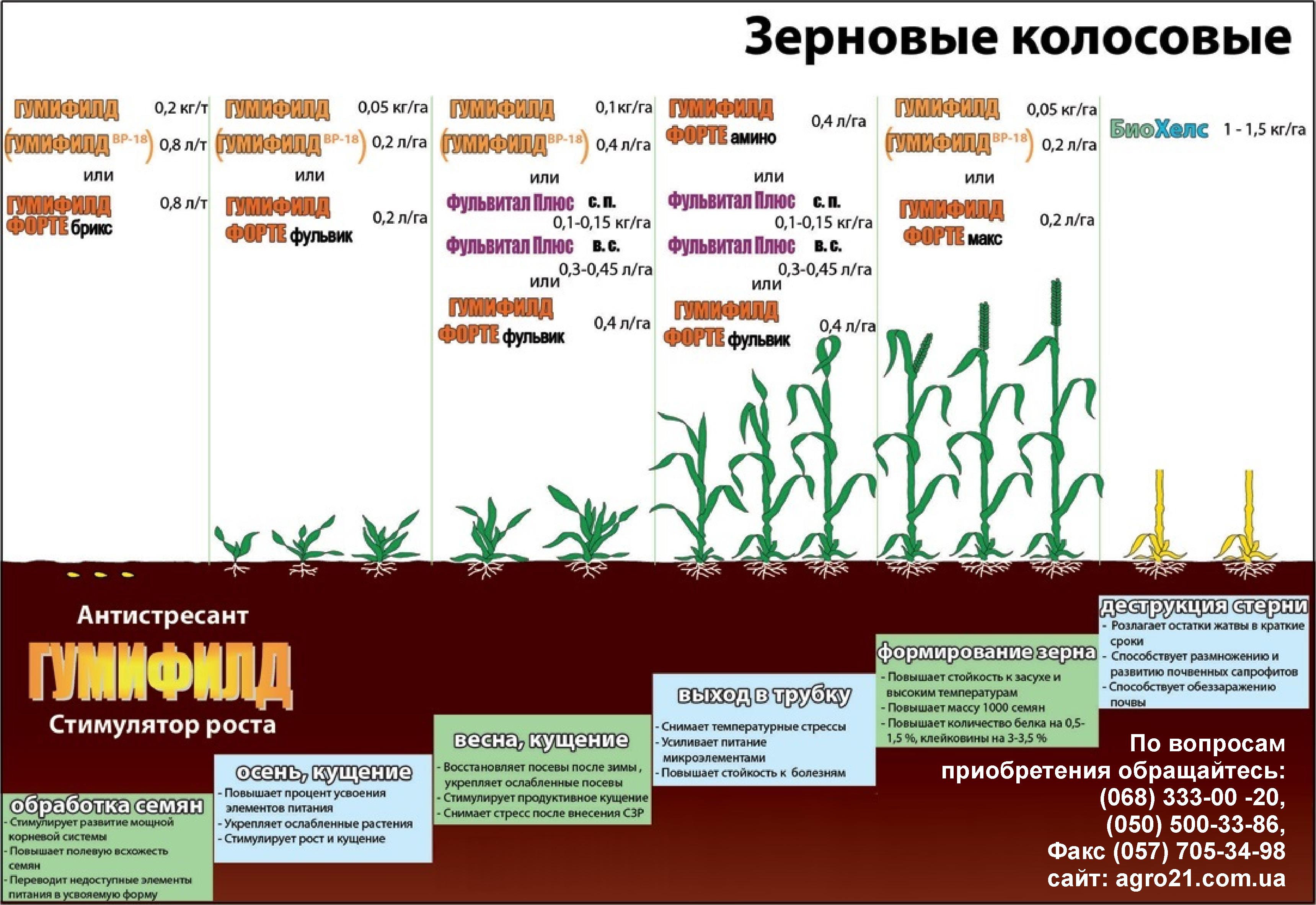 Зерновые колосовые