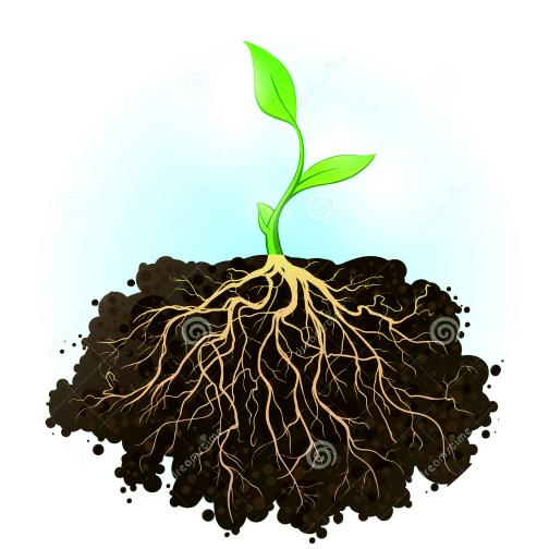 Регуляторы и стимуляторы роста