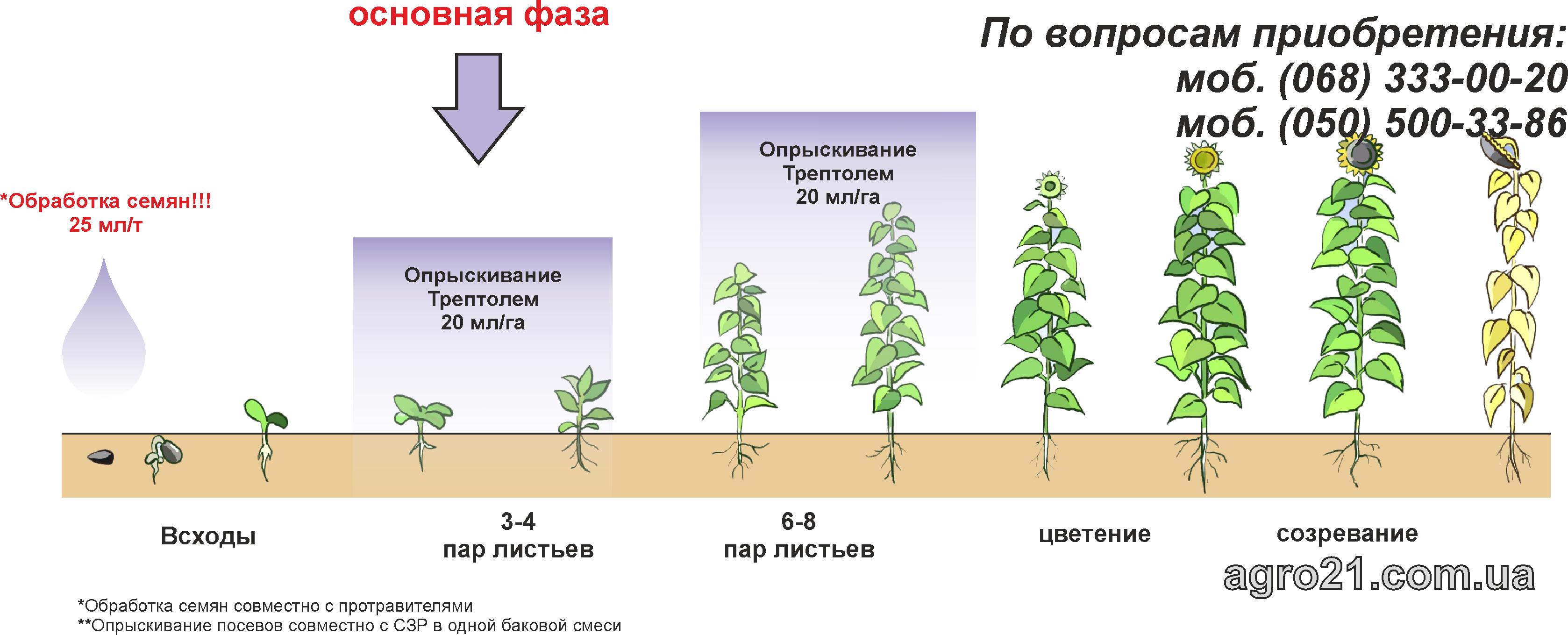 Трептолем - стимулятор росту рослин для ріпаку та соняшнику. Схеми застосування на соняшнику
