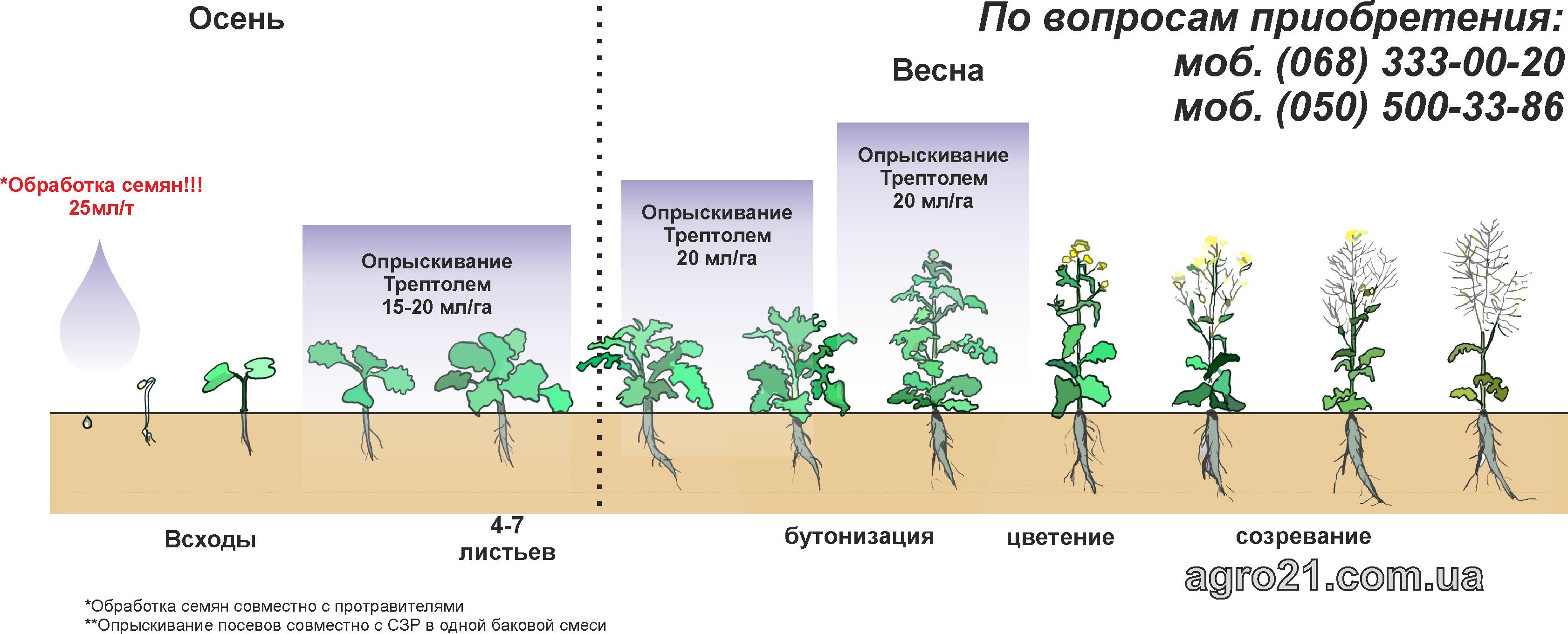 Трептолем - стимулятор росту рослин для ріпаку та соняшнику. Схеми застосування на посівах ріпаку