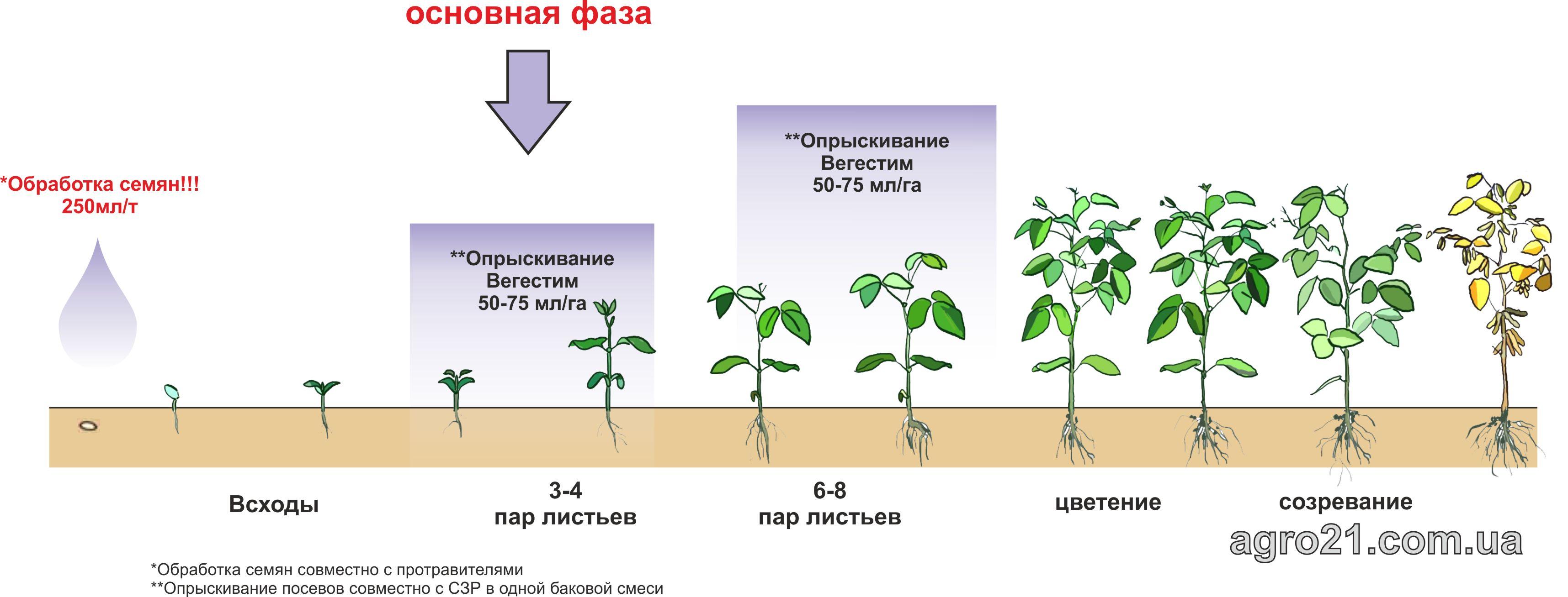 Вегестим. Схема застосування стимулятору росту рослин на посівах Сої