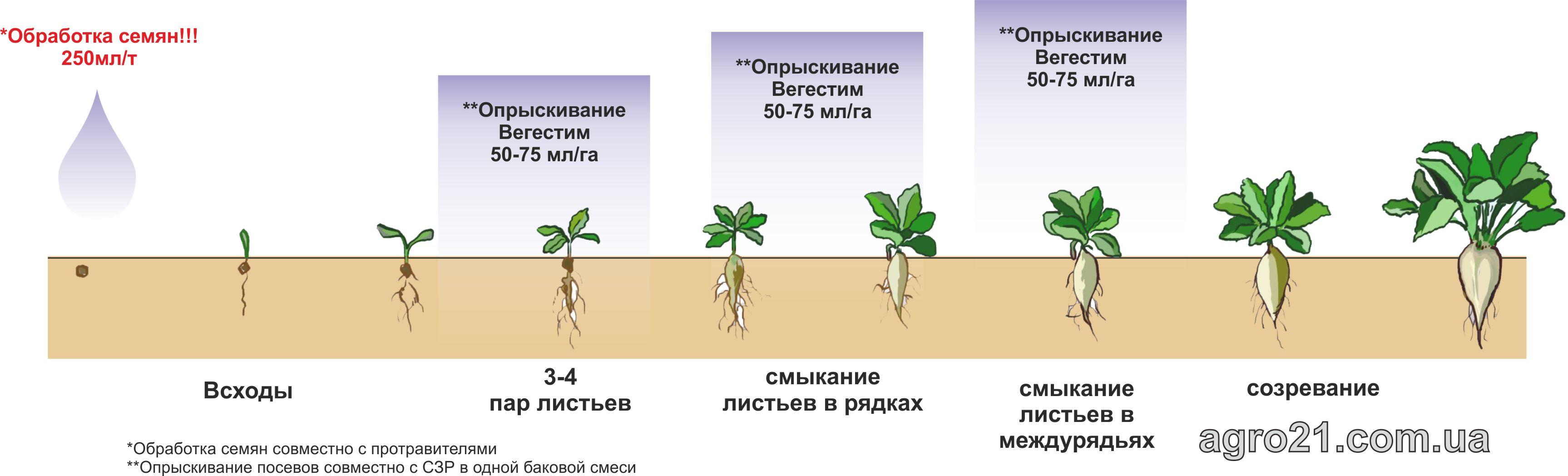 Вегестим. Схема застосування стимулятору росту рослин на посівах цукрових буряків