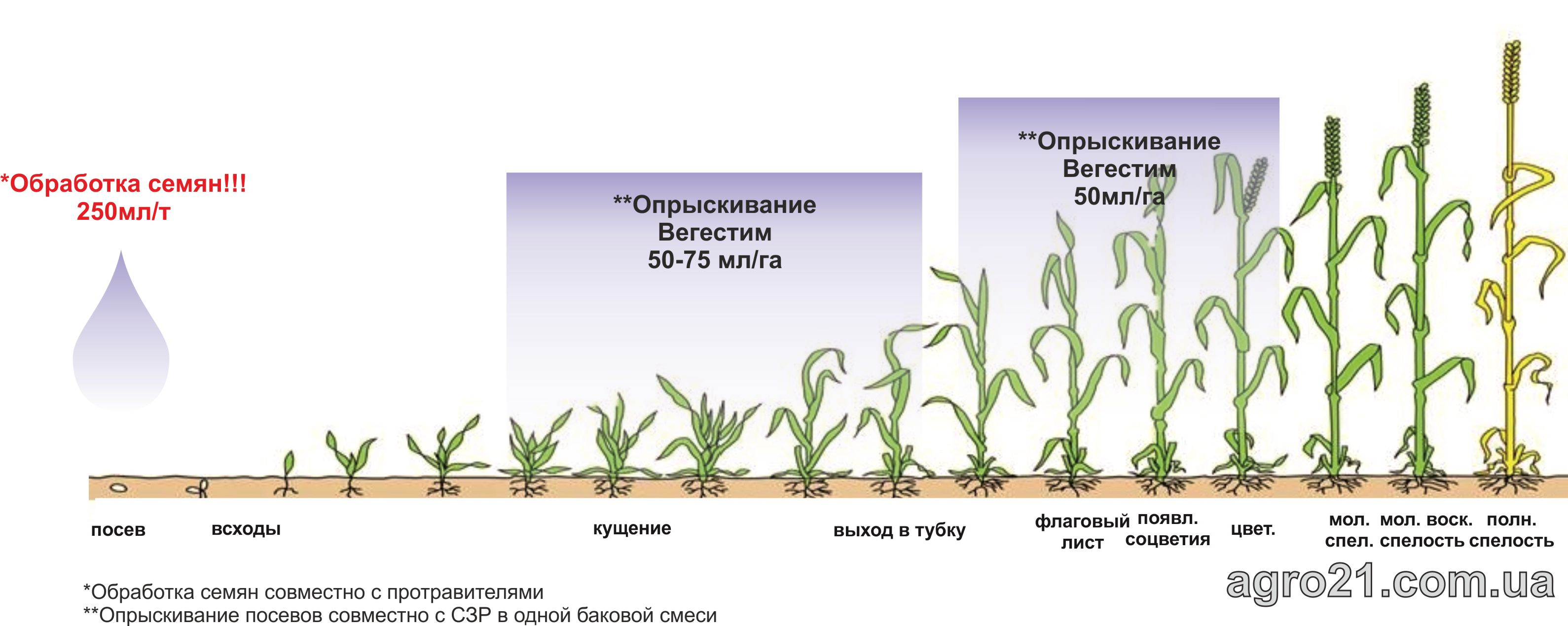 Вегестим. Схема застосування стимулятору росту рослин на зернових.